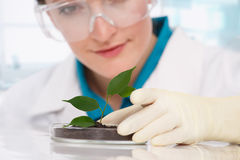 Woman biologist with plants Royalty Free Stock Photography