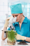 Woman biologist working with microscope Royalty Free Stock Image