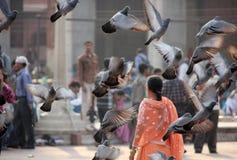 Woman and birds at Jama Masjid, Delhi Stock Photography