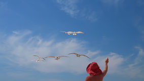 Woman and  birds of seagulls. Royalty Free Stock Photos