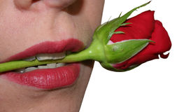 Woman biting on rose stem royalty free stock images