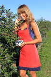 Woman bitting in a blueberry on a plantation Royalty Free Stock Image