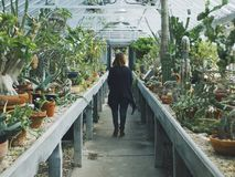 Woman in Black Cardigan Walking Between Cactus Plant Stock Images
