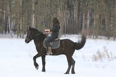 Woman on black horse in snowy forest. Telephoto shot Stock Images