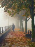 Woman in black walking down the alley on misty autumn day Stock Photos