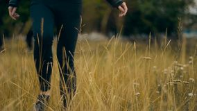 Woman in black walks through a field of wheat. Autumn stock video footage