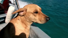 Woman blonde with a dog on a boat in the ocean. stock video footage