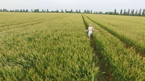 Woman with blonde hair in a blue dress walking in the field with wheat. stock footage