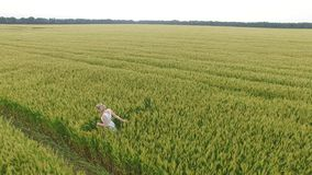 Woman with blonde hair in a blue dress walking in the field with wheat. stock video footage