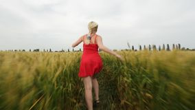 Woman with blonde hair in a red dress runs in the field with wheat. stock video footage