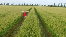 Woman with blonde hair in a red dress runsin the field with wheat. stock footage