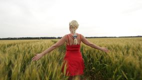 Woman with blonde hair in a red dress walking in the field with wheat. stock footage