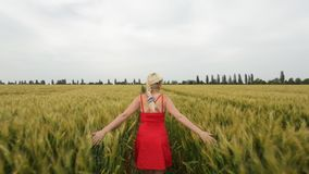 Woman with blonde hair in a red dress walking in the field with wheat. stock video