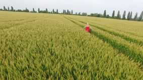 Woman with blonde hair in a red dress walking in the field with wheat. stock video footage