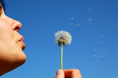 Woman bloweing dandelion Stock Photo