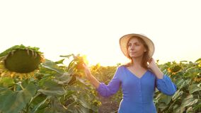 Woman in a blue dress and hat walks among the sunflowers across the field. Agriculture stock video footage