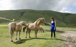 Woman in blue with horses Stock Image