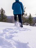 Woman in blue jacket snowshoeing Royalty Free Stock Photography