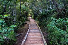 Woman on boardwalk in thick forest Stock Photo