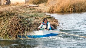 Woman in a boat carrying reed on the Titicaca lake in Bolivia. Lake Titicaca, Bolivia - September 2017: Woman in a boat carrying reed on the Titicaca lake in Royalty Free Stock Photo