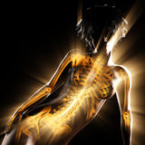Woman bones radiography scan image. 3D rendered Stock Images