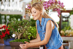 Woman with bonsai tree in nursery. Smiling woman with bonsai apple tree in a nursery Stock Photo