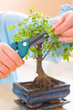Woman with bonsai tree Stock Images