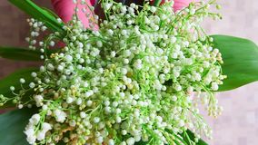Woman with bouquet of lilies of the valley flowers, congratulation to anniversary or happy birthday concept. Woman with bouquet of lilies of the valley stock video footage