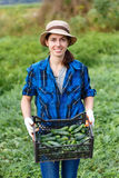 Woman with a box of harvested cucumbers
