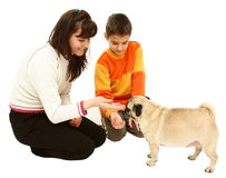 Woman boy and dog. A women and a boy giving food to a dog (mops) isolated on a white background Royalty Free Stock Image