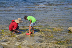 A Woman And Boy Looking For Crabs In The Rocks Stock Images