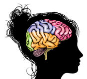 Woman brain concept Stock Image