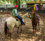A horse trainer training a yearling with the help of her pony stock photography