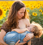 Woman breastfeeding baby. Beautiful young women breastfeeding her baby in spring sunflower field Stock Photography