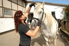Woman bridles  horse. Royalty Free Stock Images