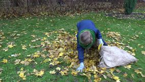 Woman bring leaves into fabric bag in garden. Seasonal work. 4K. Young woman gardener bring autumnal leaves into fabric bag in garden. Seasonal work in autumn stock video