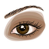 Woman brown beautiful eye. Vector illustration Royalty Free Stock Photography