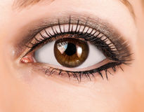 Woman brown eye with long lashes. Woman brown eye with false extremely long lashes royalty free stock images