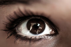 Woman brown eye with pastel color makeup and long Stock Images
