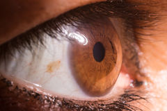 Woman Brown eyes. Close up photo. Iris stock photos