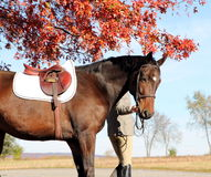Woman with Brown Horse in Fall Royalty Free Stock Images