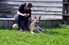Woman brushes her dog. Woman brushes her Belgian Malinois dog Royalty Free Stock Photo