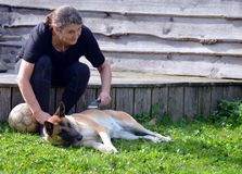 Woman brushes her dog. Woman brushes her Belgian Malinois dog Stock Image