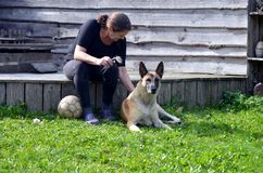 Woman brushes her dog. Woman brushes her Belgian Malinois dog Stock Photo