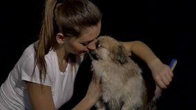 Woman brushing her dog stock video footage
