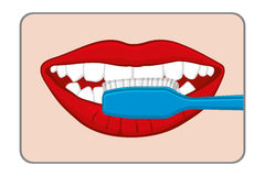 Woman brushing her teeth vector illustration Stock Photography