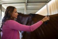 Woman brushing horse stock photography