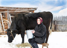 Woman with  bucket milking near cow Stock Photography