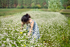 Woman at the buckwheat field. A young woman in the field of buckwheat royalty free stock photography