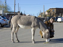 Woman with Burro in Street Royalty Free Stock Photography